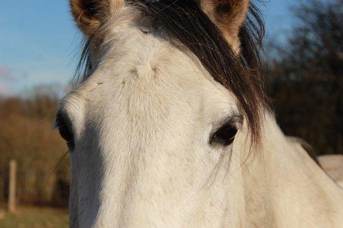horse  horses  look