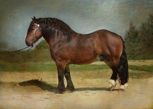 horse  equine  draft