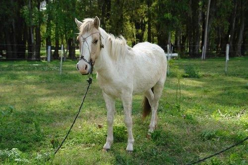 horse  animals  grass