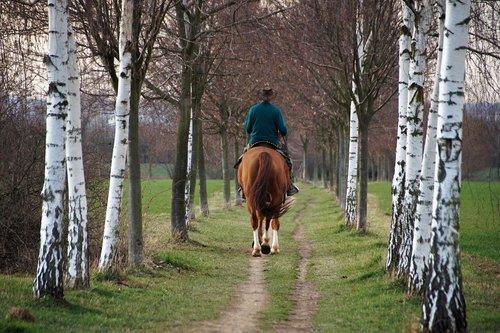 horse  rider  vernal