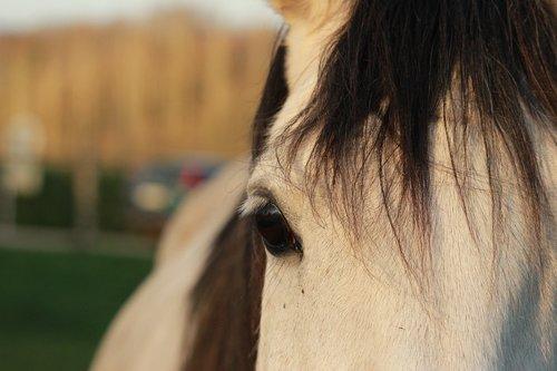 horse  horses  arabian horse