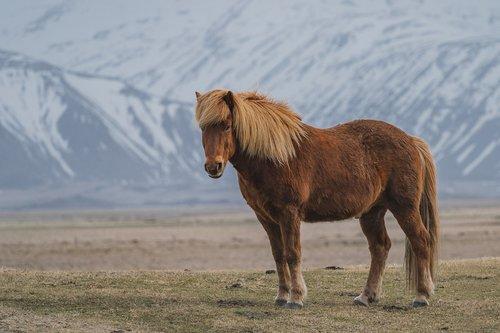 horse  vacation  landscape