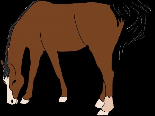 horse brown animal