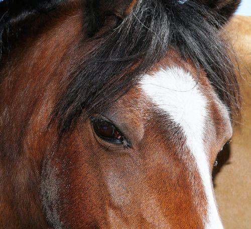 horse horse head close