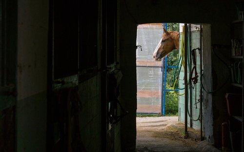 horse  riding school  riding