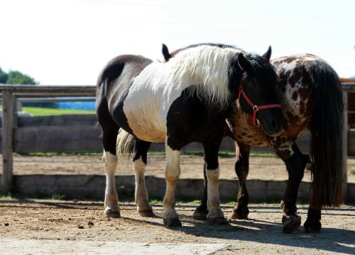horse pony together