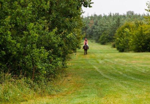 horse  galloping  gallop