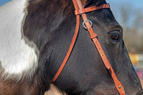 horse animal bridle
