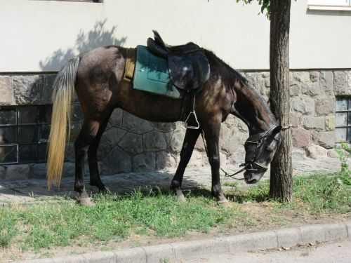 horse saddle horses