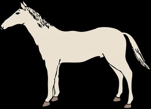 horse mustang stallion