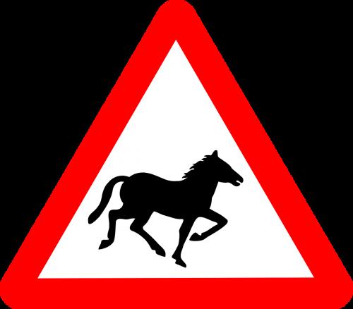 horse information transport