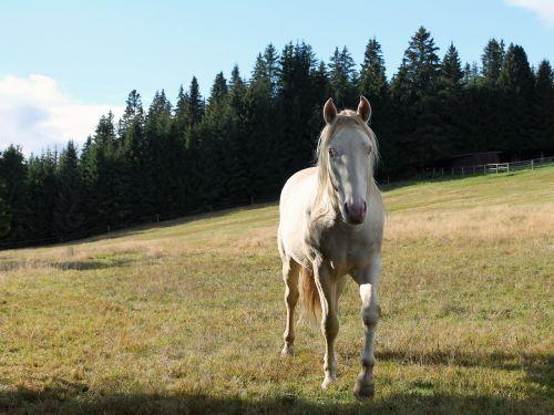 arklys,gamta,rašiklis
