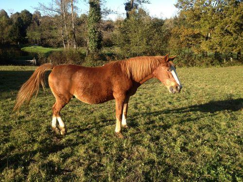 horse animal ability