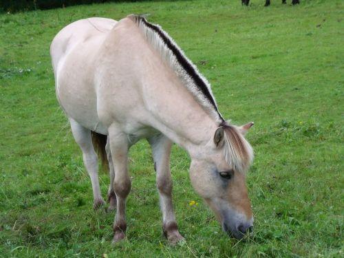 horse pasture prato