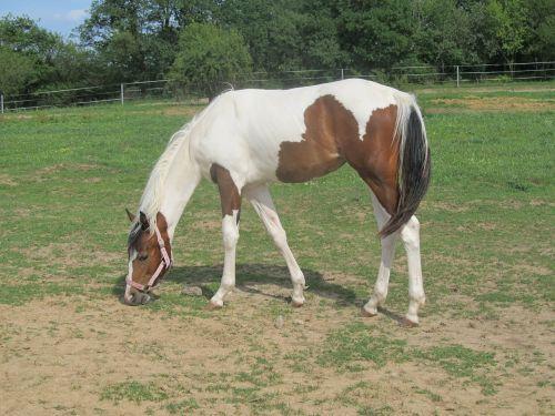 horse animal horses
