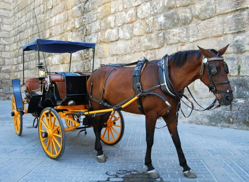 horse wheels romantic