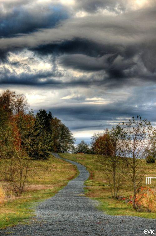 horse trail skies