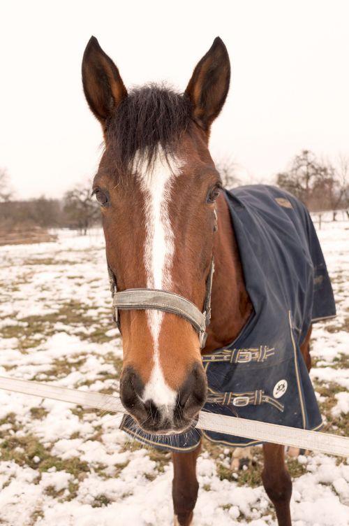 horse ride stallion