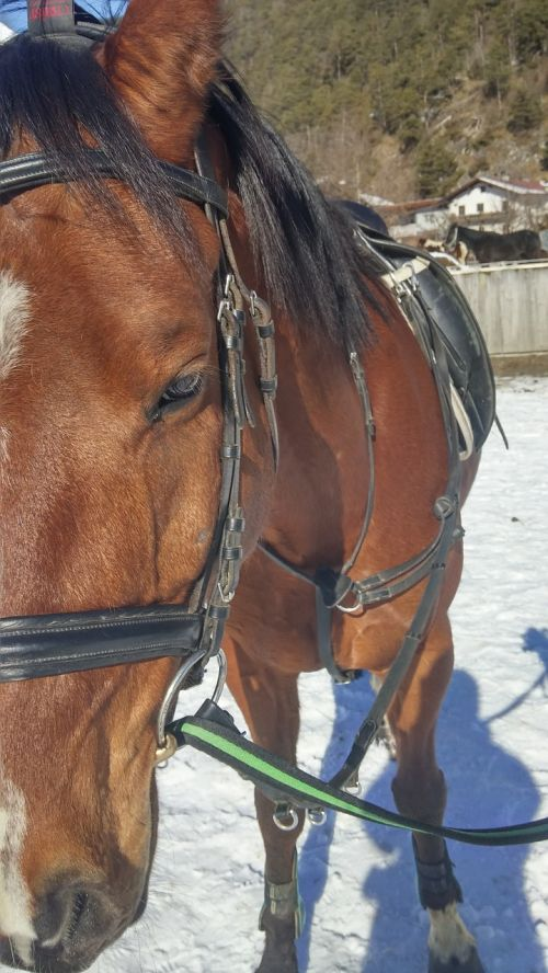 horse bridle saddle