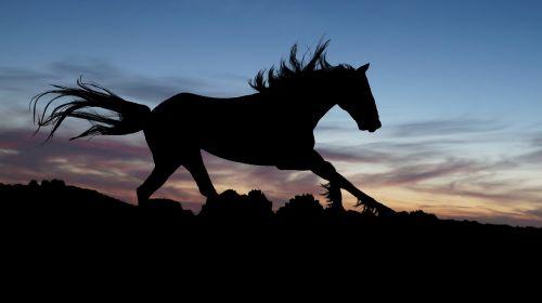 horse gallop sunset