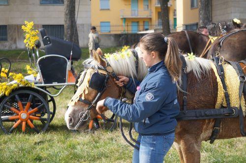 horse amazon blinders