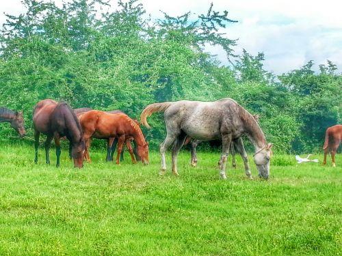 horse puerto rico green