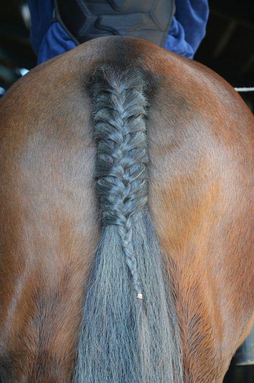 horse tail animal
