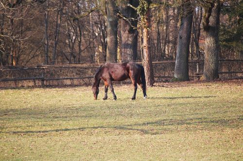 horse coupling pasture