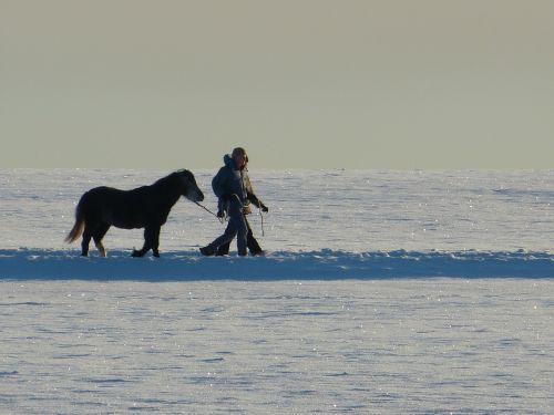 horse human back light