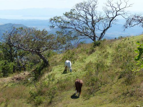 horse costa rica central america