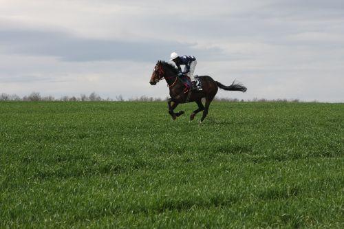 horse racehorse gallop