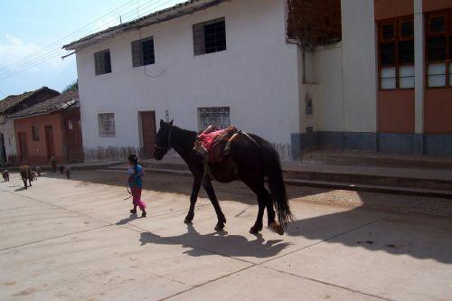 horse peru horses
