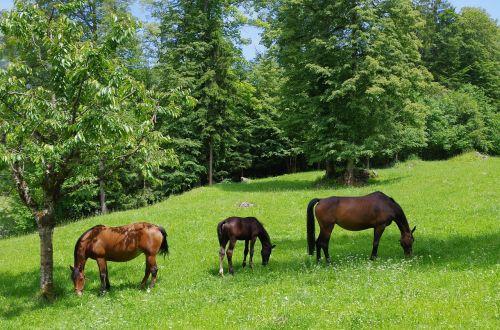 horse horses frank mountain