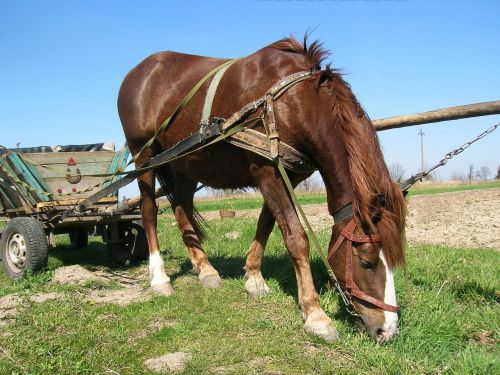 horse wagon village