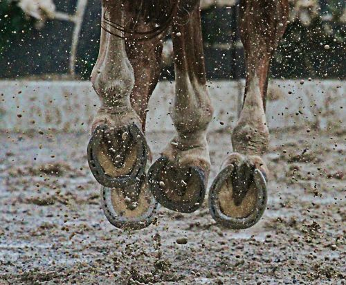 horse,hooves,mud,animal,sport,sporthorse,action,feet,legs,equine sport,horse show,hunter-jumper,show,rider,jumping,canter,air,flying