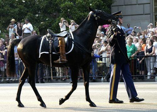 horse riderless boots turned backwards
