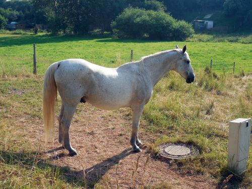 horse paddock mane