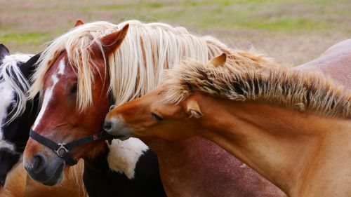 horse horses cold blooded animals