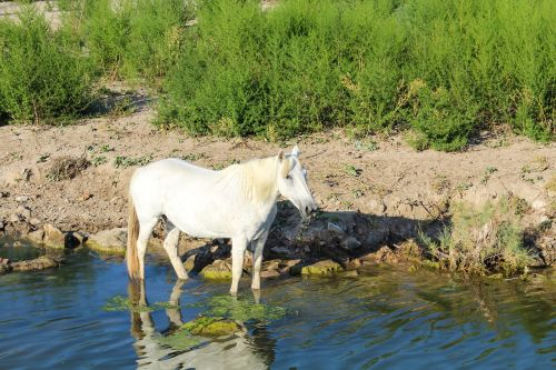 horse nature water