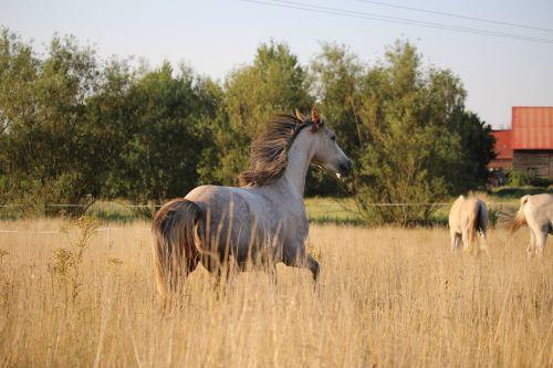 horse pasture gallop