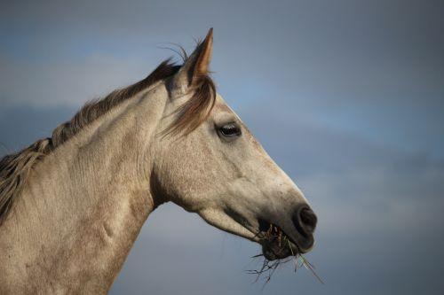 horse mold mare