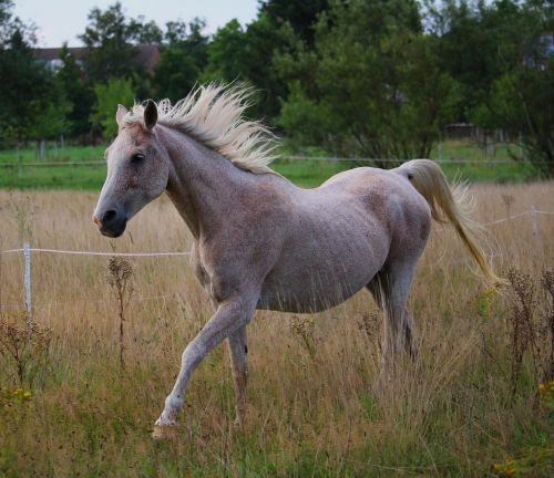horse gallop mold