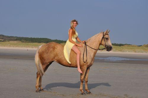 horse quarter horse beach