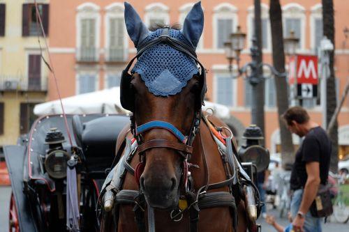 horse monteaura coach