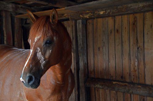horse stall shelter