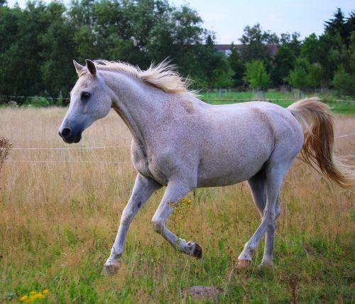 horse gallop pasture