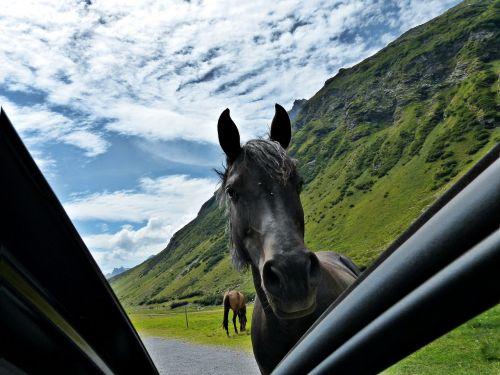 horse road encounter