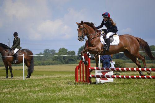 horse jumping jumps