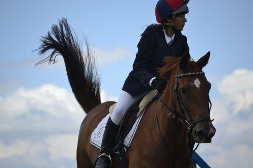horse jumping horse jumping