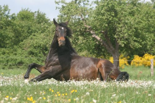 horse rolling stand up